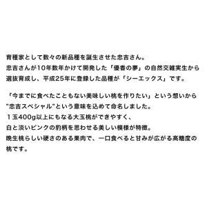 福島県 高橋もも園の白桃「シーエックス」 化粧箱入り 約3kg(6〜8玉入) ※送料無料|umeebeccyasannriku|03