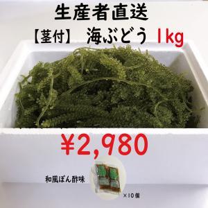 """生!海ぶどうドーンと1kg (茎付き)タレ付き☆生産者が送る""""鮮度抜群""""海ぶどう"""
