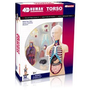 人体解剖模型 胴体解剖モデル Human Anatomy TORSO uminekoya