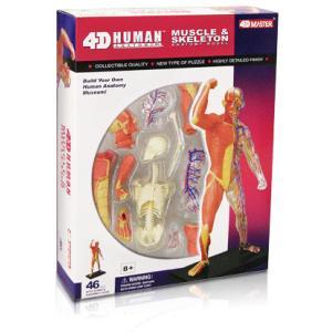人体解剖模型 筋肉・骨格モデル Human Muscle & Skeleton Model|uminekoya