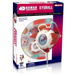 人体解剖模型 眼球解剖モデル Human Anatomy EYEBALL|uminekoya
