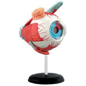 人体解剖模型 眼球解剖モデル Human Anatomy EYEBALL|uminekoya|02
