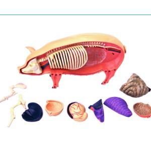 4D立体パズル動物解剖モデル ブタ Pig|uminekoya