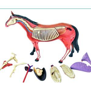 4D立体パズル動物解剖モデル ウマ Horse uminekoya