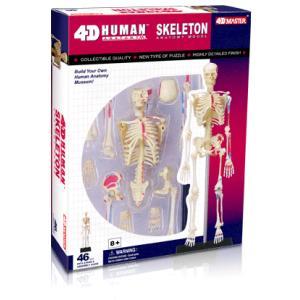 人体解剖模型 全身骨格解剖モデル Human Skeleton Model|uminekoya