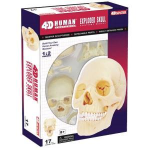 人体解剖模型 1/2頭蓋骨解剖モデル EXPLODED SKULL|uminekoya