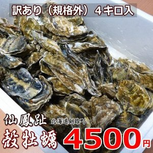 仙鳳趾(せんぽうし)の牡蠣は甘みもあり味が濃厚です。 基準外で小ぶりな為、見た目は小さいですが味は一...