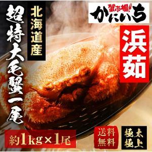 【G-1000】超特大 毛蟹 約1尾 1kg 北海道産 浜茹で 送料無料