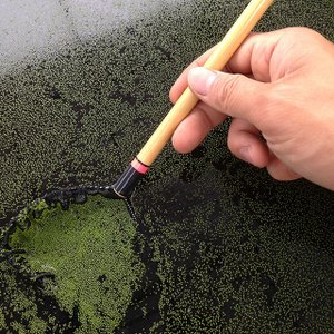 無農薬ミジンコウキクサ(仁丹藻・ミジンコ藻)