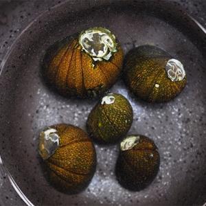 石巻貝(5個セット)