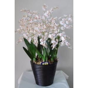 オンシジューム 白 10本 光触媒造花の国内生産品 24時間効果持続のダブルコーティング unicorn802