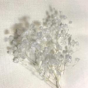 カスミソウ オーバータイム ホワイト 少量パックプリザーブドフラワー小花かすみかすみ草 unicorn802