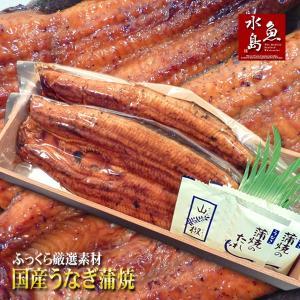 国産 鰻うなぎ蒲焼き ふっくら厳選素材 約30cm特々大 約...