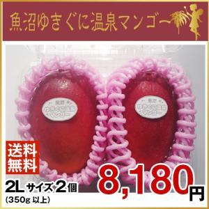 魚沼ゆきぐに温泉マンゴー 2Lサイズ2個(7月より、順次発送致します。)|uonumanoyousei