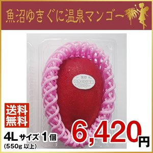 魚沼ゆきぐに温泉マンゴー 4Lサイズ1個(7月より、順次発送致します。)|uonumanoyousei