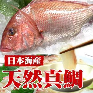 日本海 天然真鯛 一尾 約1kg 生|uoya