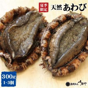 日本海産 天然あわび 300g(1〜3個) アワビ/鮑/貝類/魚介/お中元/ギフト|uoya
