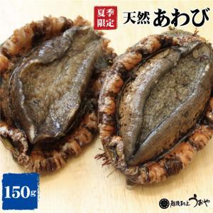 日本海産 天然あわび  1個 (150g)  アワビ/鮑/貝類/魚介/お中元/ギフト|uoya