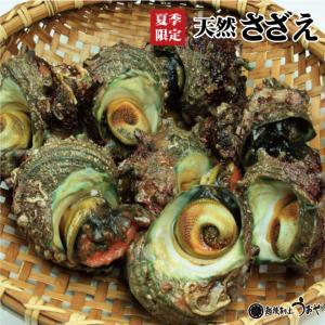 新潟県産 天然さざえ 1個|uoya