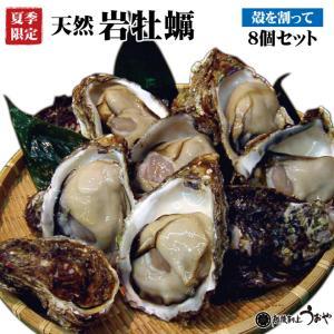 日本海産 天然岩牡蠣 殻を割ってお届け 8個セット 殻付き かき カキ お中元 ギフト|uoya