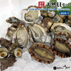 日本海産 天然貝(煮ばい貝付)Cセット【岩牡蠣(殻を割ってお届け)、あわび、サザエ、煮ばい貝】|uoya