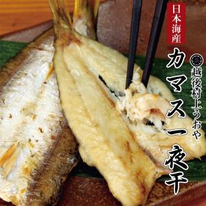 日本海産 カマス一夜干 3〜4尾入 uoya