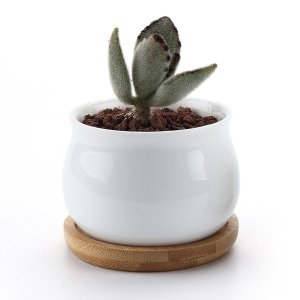 T4U 7cm 陶器鉢 白 ジャーシェイプデザイン 植木鉢 多肉植物 サボテン鉢 花鉢 容器 プランター 2個入り|urarakastr