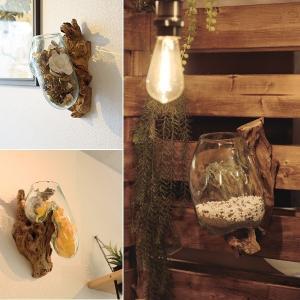 壁掛けインテリア 水槽 おしゃれ オブジェ 流木 ガラス 壁面 珍しい形 変わった形 変な形 ユニーク 個性的 一点もの 魚 メダカ 金魚 観葉植物|usagi-shop