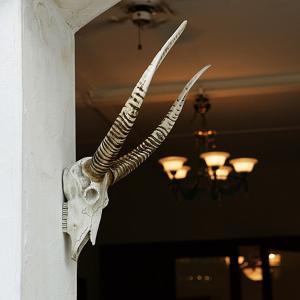 動物 首 頭 ハンティングトロフィー アニマルヘッド 壁掛け 置き物 インテリア おしゃれ アンテロープ|usagi-shop