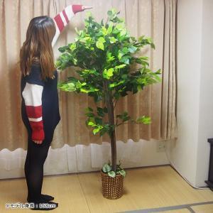 造木 観葉植物 人工樹木 偽物 リアル 造花 ...の詳細画像5