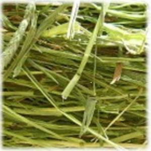 アメリカンチモシー1番刈り牧草 500g × 2|usagiya|02