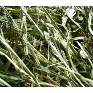 アメリカンチモシー2番刈り牧草  ダブルプレス 500g × 2 usagiya