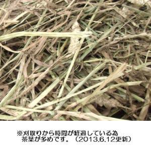 カナダチモシー1番刈り牧草 500g × 2 usagiya 02