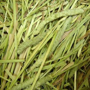 カナダチモシー1番刈り牧草 2kg|usagiya