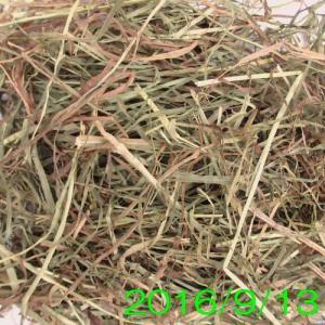 カナダチモシー 2番刈り牧草 ダブルプレス 500g × 2 usagiya 02