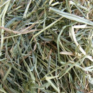 北海道チモシー2番刈り牧草 500g|usagiya