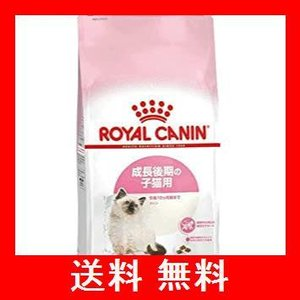 ロイヤルカナン FHN キトン 子猫用 2kg|utidenokozuchi