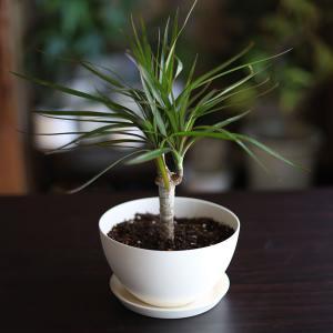 白い陶器の植木鉢(つやなし、マットタイプ) / ボールタイプ|utyu|13