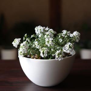 白い陶器の植木鉢(つやなし、マットタイプ) / ボールタイプ|utyu|03