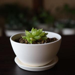 白い陶器の植木鉢(つやなし、マットタイプ) / ボールタイプ|utyu|05