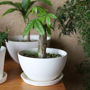 白い陶器の植木鉢(つやなし、マットタイプ) / ボールタイプ|utyu|06