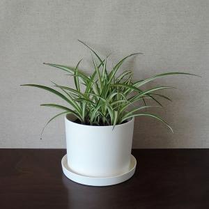 白い陶器の植木鉢(つやなし、マットタイプ) / ずんどうタイプ|utyu|11