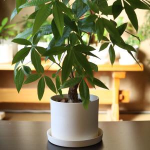 白い陶器の植木鉢(つやなし、マットタイプ) / ずんどうタイプ|utyu|13