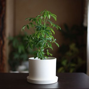 白い陶器の植木鉢(つやなし、マットタイプ) / ずんどうタイプ|utyu|03