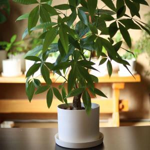 白い陶器の植木鉢(つやなし、マットタイプ) / ずんどうタイプ|utyu|04