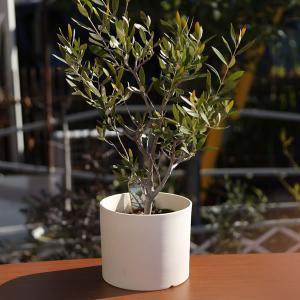 白い陶器の植木鉢(つやなし、マットタイプ) / ずんどうタイプ|utyu|09