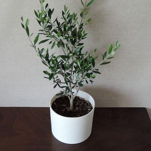 白い陶器の植木鉢(つやなし、マットタイプ) / ずんどうタイプ|utyu|10