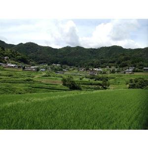 ひのひかり 玄米 高千穂産 (3kg)|uzumeya