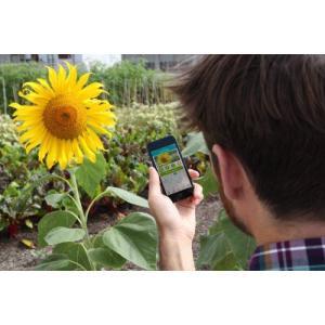 パロットフラワーパワーParrot Flower Power スマホで植物の健康状態を把握 (グリーン) value-select 04