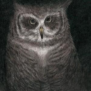 フクロウの声が聞こえる(完全生産限定盤) / 小沢健二とSE...